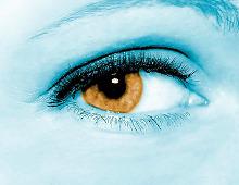 De l'oeil au cerveau : les cartes de la perception visuelle