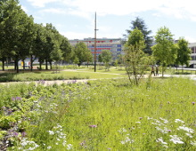 Au printemps, la faune et la flore prennent possession du parc de l'université